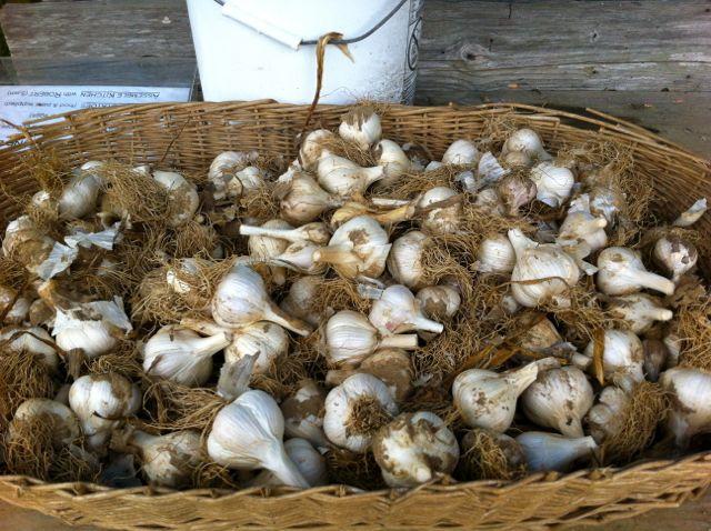 Quail Farming Business Plan – 1000 Birds Egg Quail Production