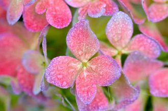 petals9