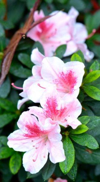 petals13