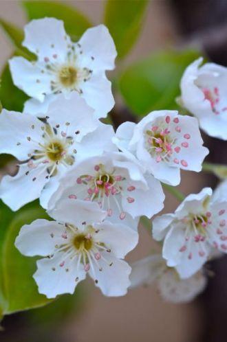 bloom13