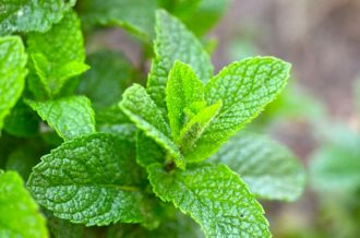 Mint, already trying to take over.