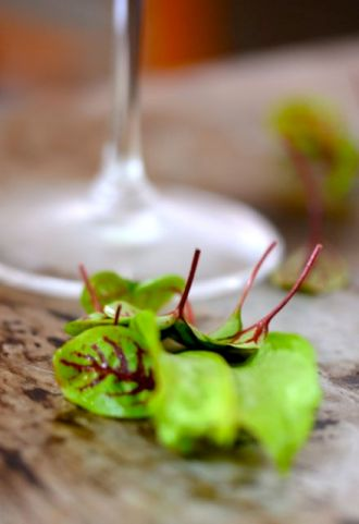Love that red-veined sorrel...